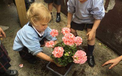 Plantar y decorar